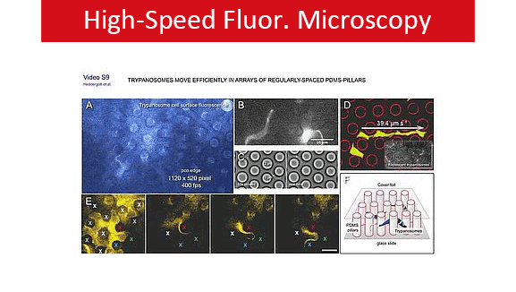 High-Speed Flour. Microscopy